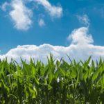 Sozial-ökologische Bankarbeit – Interview mit Rouven Kasten von der GLS Bank