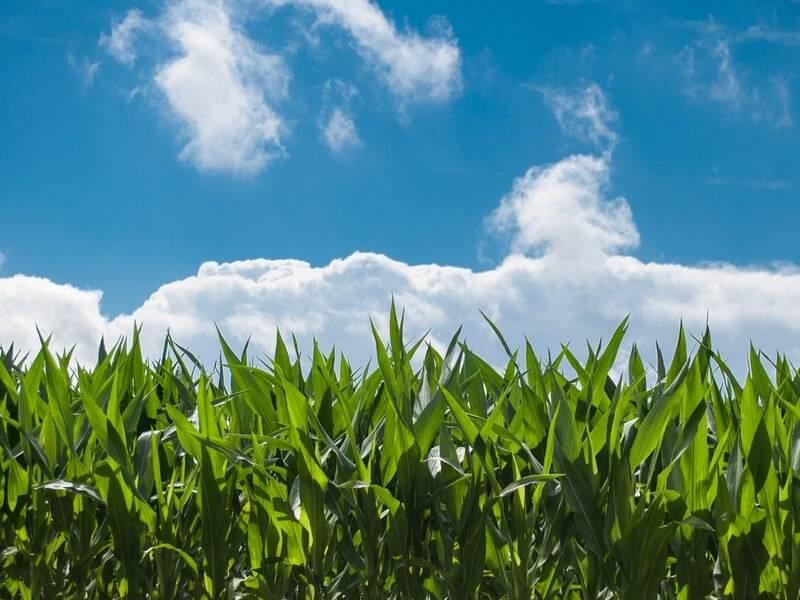 Gls Bank Sozial ökologische Bankarbeit Interview Mit